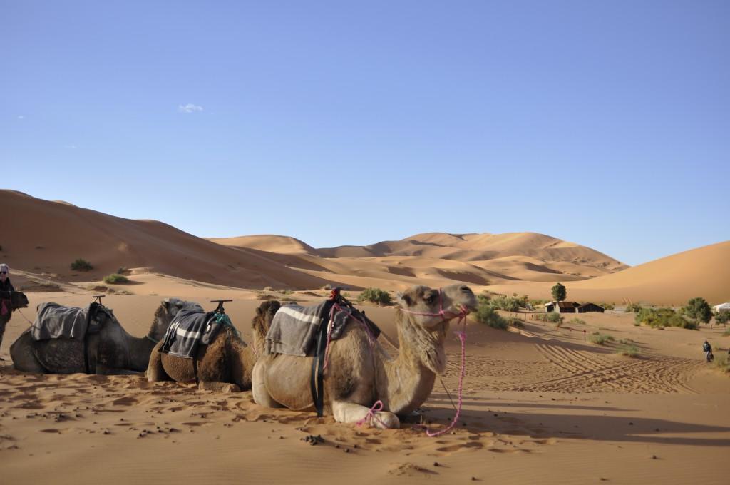 Utsikt over sanddynene i Merzouga, og leiren vår.