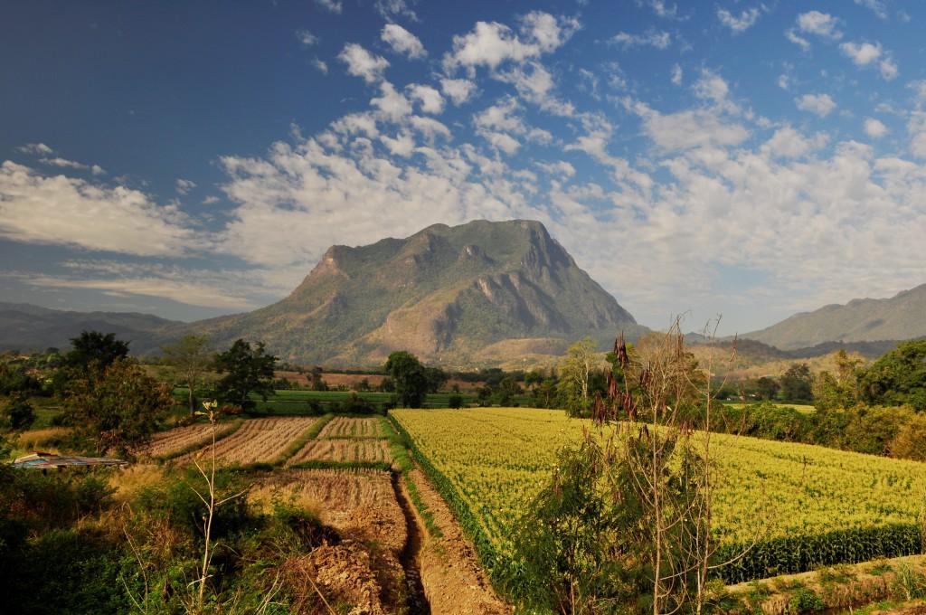 Thaiene dyrker te og ris i disse nordlige områdene. Vakrere jordbruksområder skal du vel lete lenge etter.